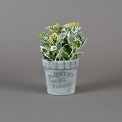 MACETA C/PLANTA FRUTOS FLOWERS & PLANTS 11*24CM